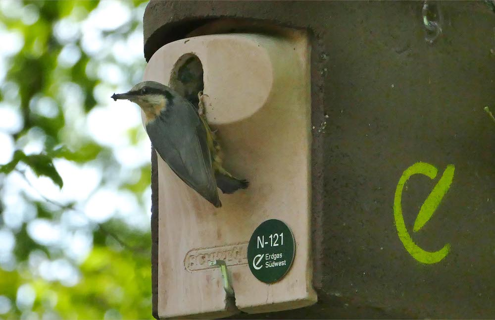 Vogel vor einem Nistkasten der Initiative ProNatur für Umweltschutz und Biodiversität.