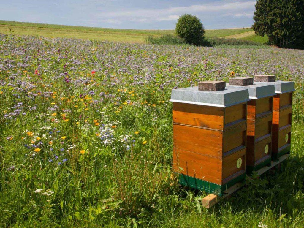 Bienenstöcke in Göffingen
