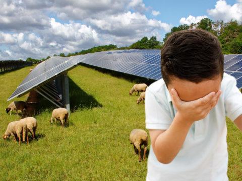 Junge mit Facepalm vor Solaranlage