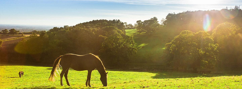 Pferd auf Weide bei St.Hippolyt Mühle Ebert