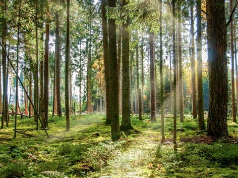 Nachhaltiger Wald im Schwarzwald für Klimaschutz